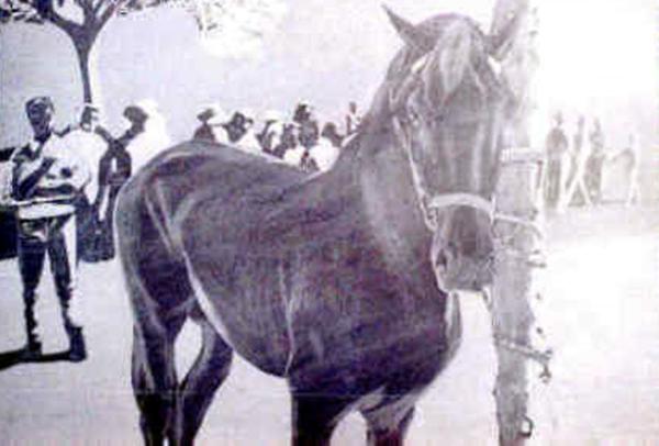 El último caballo  | Dr. Angel Escudero Juan