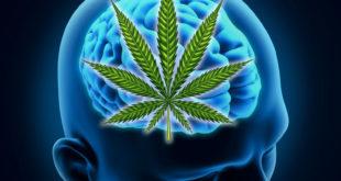 PSICO regulacion cannabis